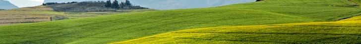 field soil